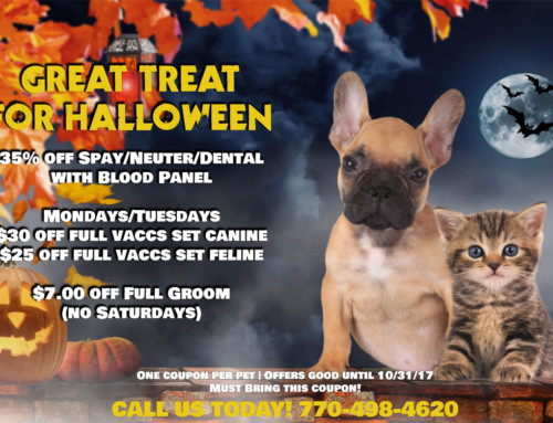 Great Treat for Halloween Monthly Special