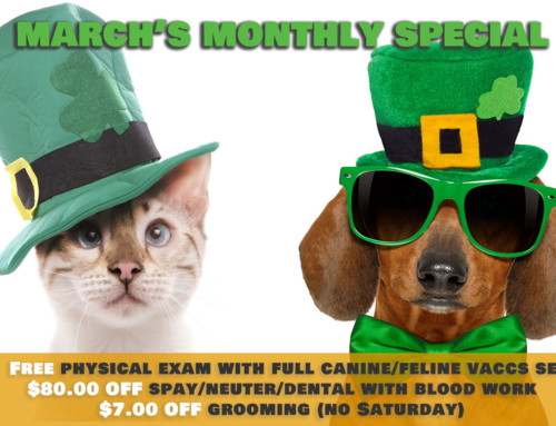 March Monthly Specials