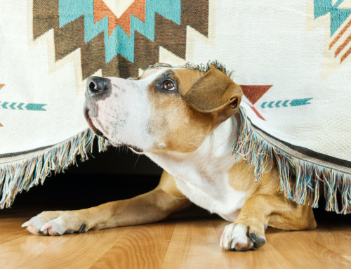 Understanding and Helping Ease Separation Anxiety in Dogs