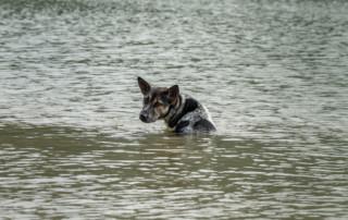hurricane prep pets