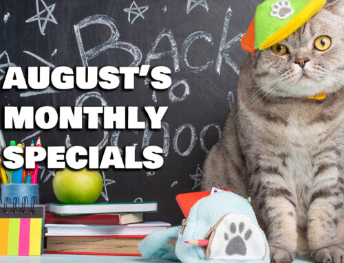 August's Monthly Specials!