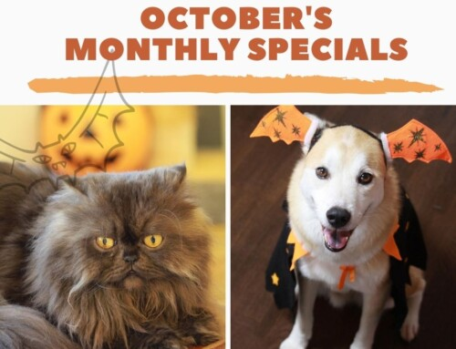 October's Monthly Specials