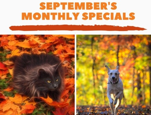 September's Monthly Specials