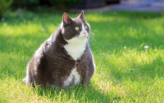 cat weight and health